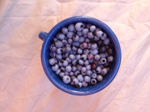 Blueberries from Truro