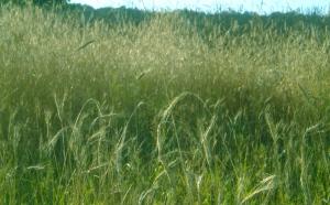 Steep Hollow Field