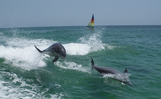 dolphins-1069473_960_720