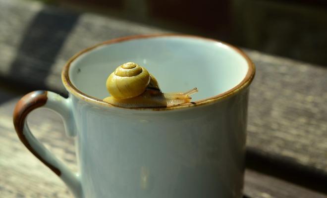 snail-on-mug