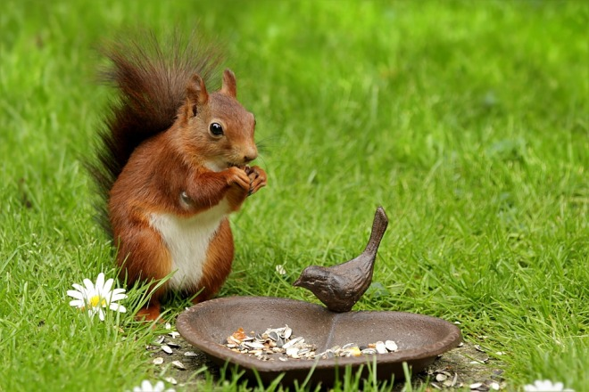 squirrel-eating