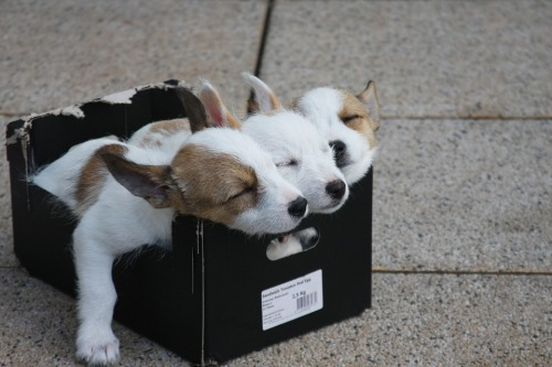 puppies-sleeping