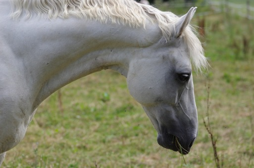 horse-beautiful-neck
