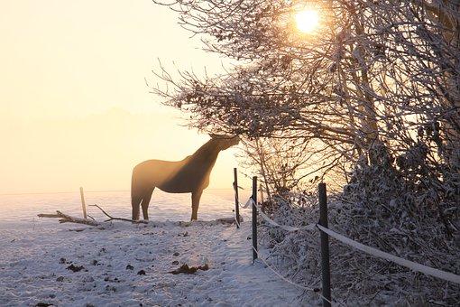horse-winter-sun