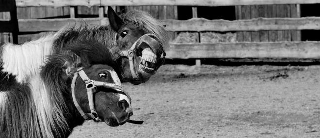 horses-clowning