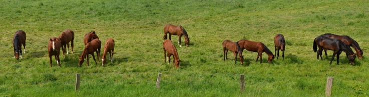 horses-in-green-field