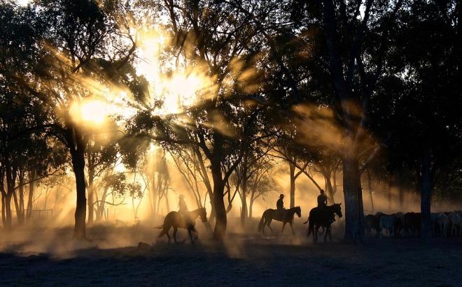 Horses-mist-trees