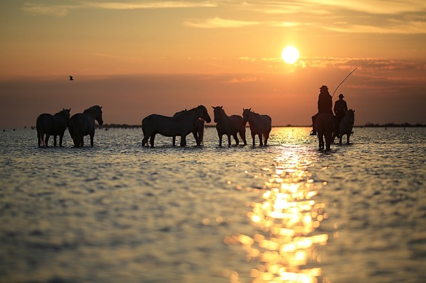 horses-water-sunset