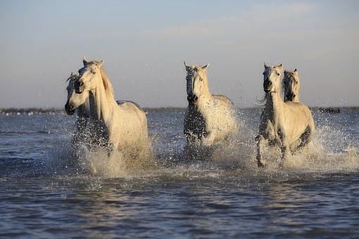 horses-water