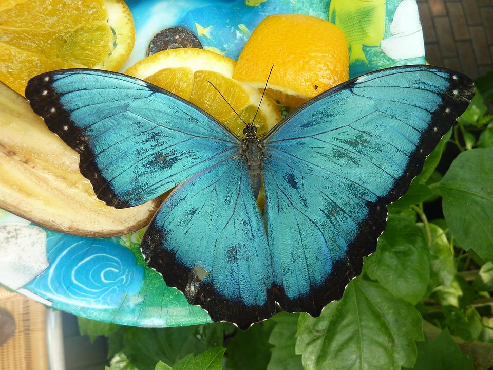 Butterfly14