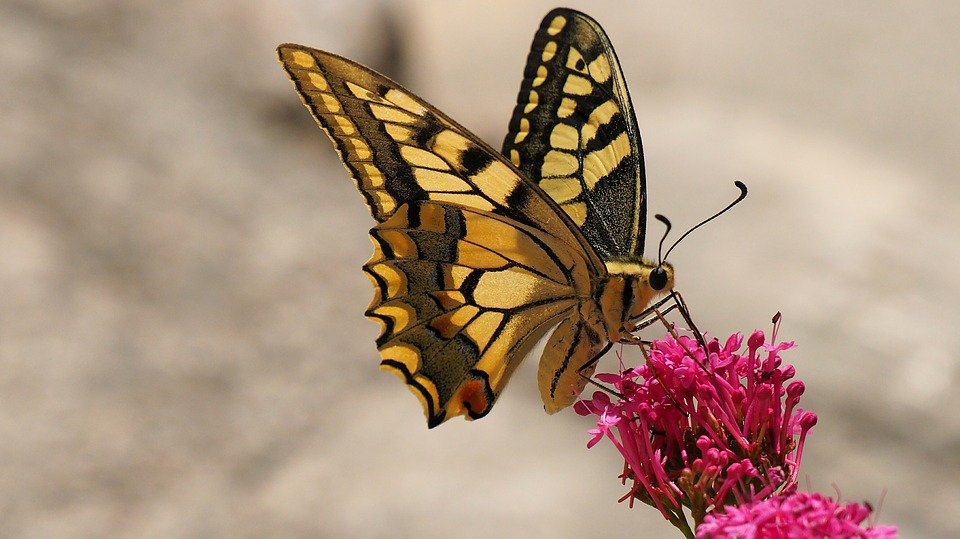 Butterfly8