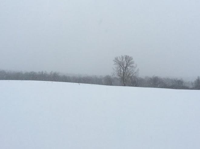 SnowFieldTree2Christianne