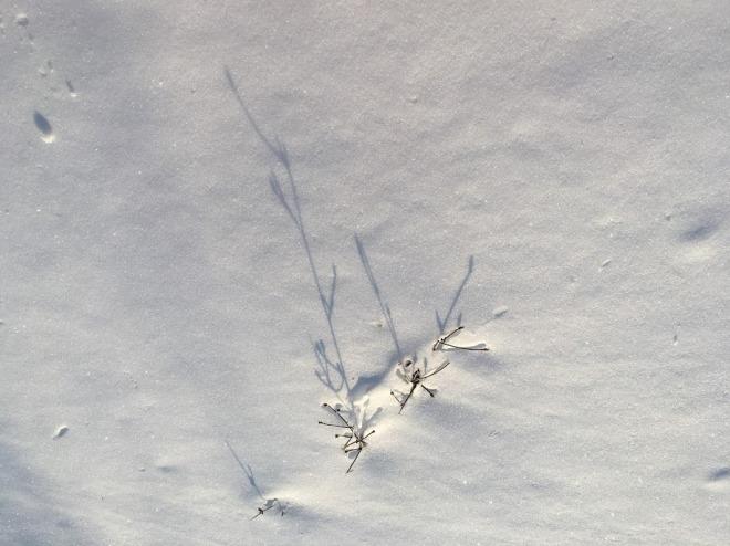 SnowTwigsShadowChristianne