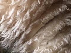 Wool9