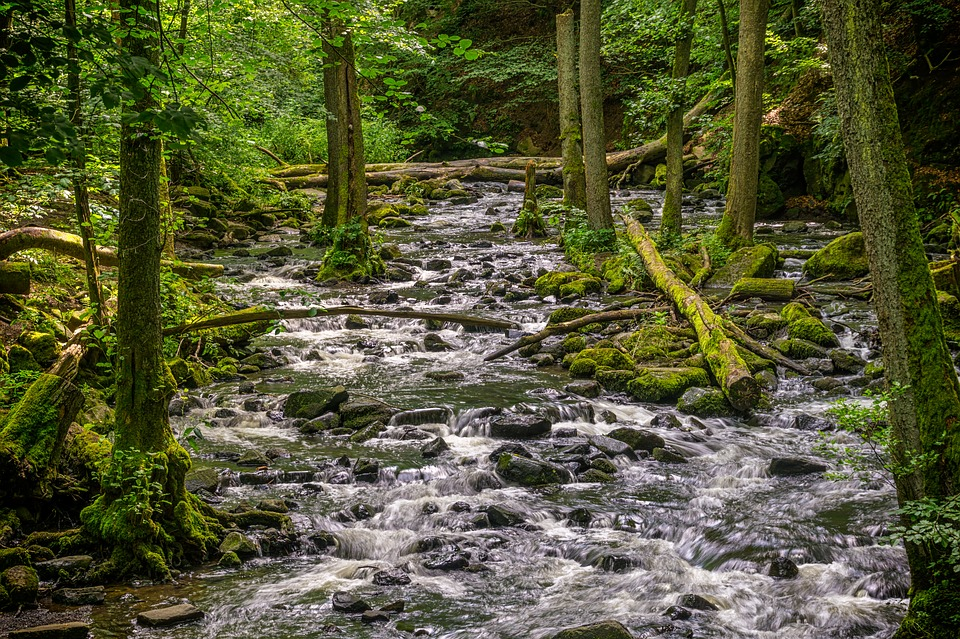 Forest-Stream