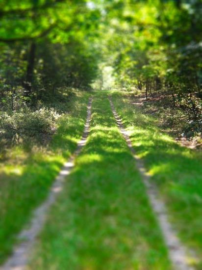 Grassy-Woodland-Road