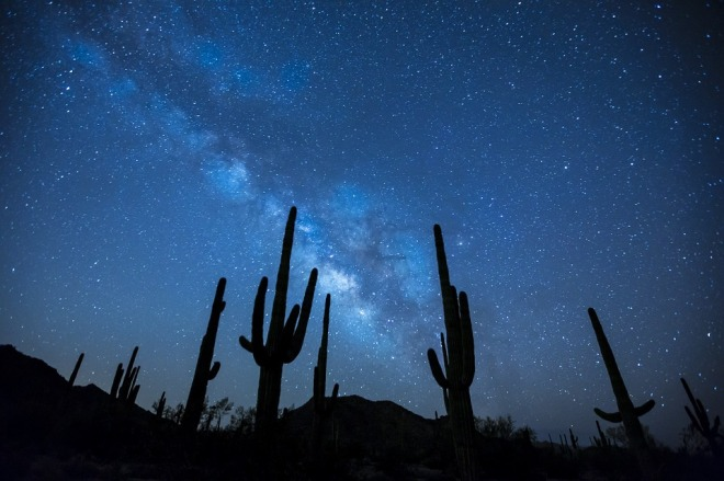 Stars-Cactii
