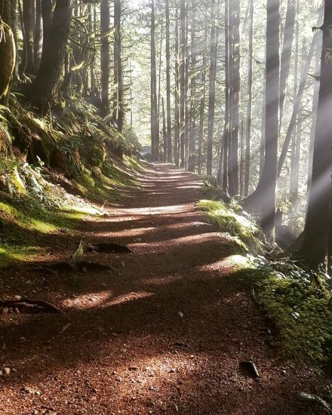 Sunlit-Woods