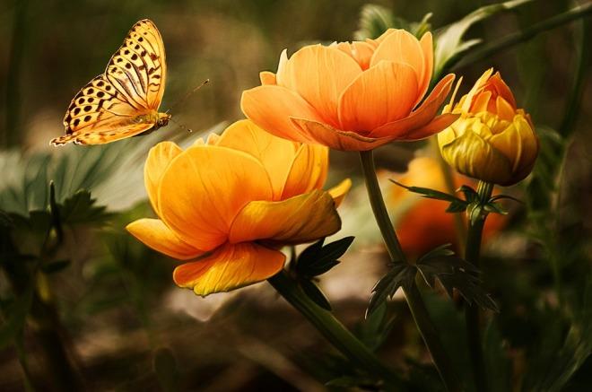 Flower&Butterfly