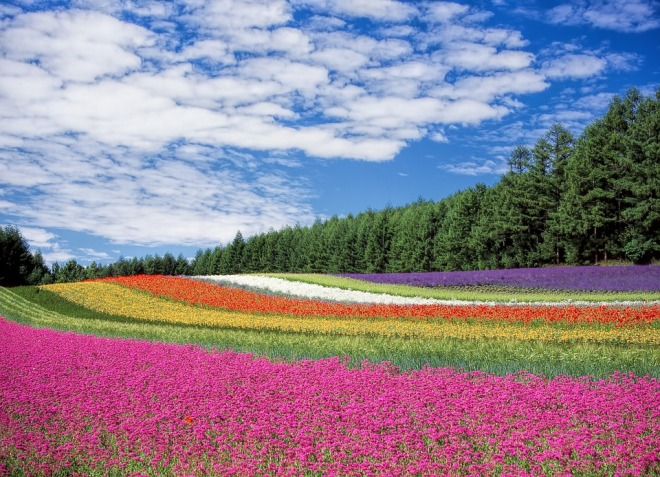 RainbowFlowerField