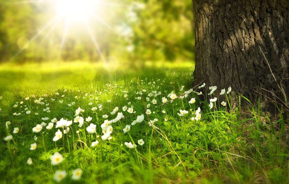 SpringFlowersTreeSun