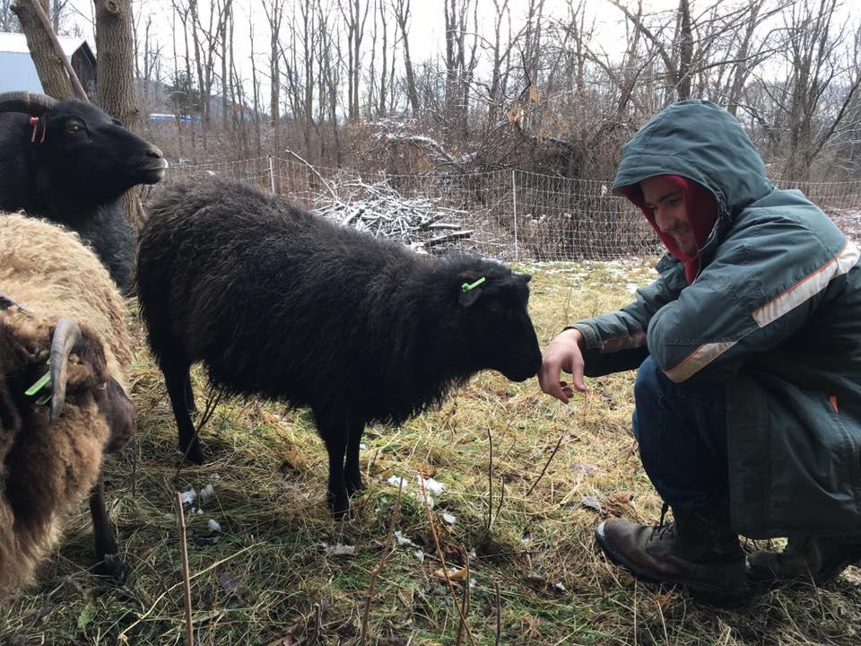 SheepSniffingJasper