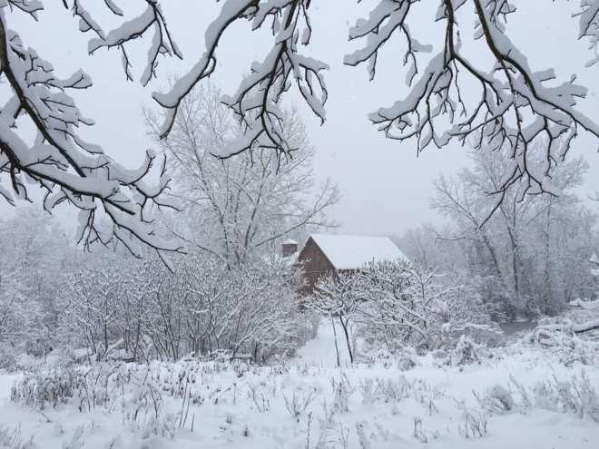 SnowBranchesBarn