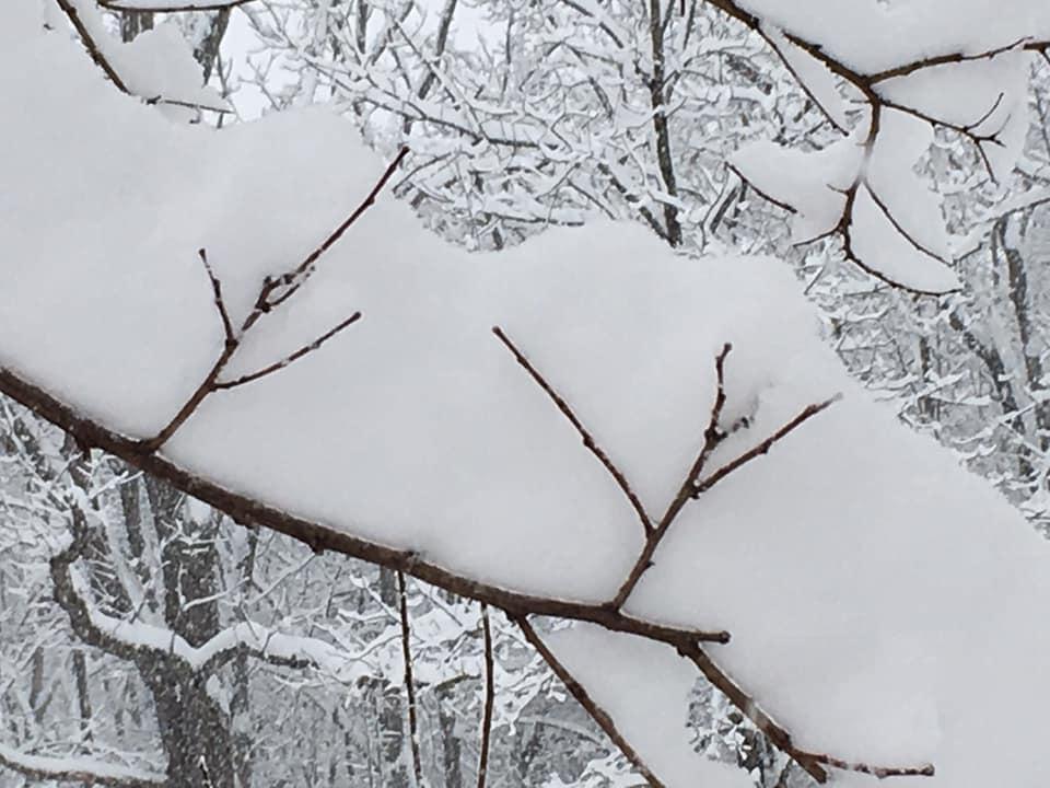 SnowonBranchesatFarm