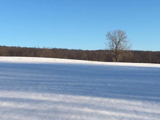 SnowyBlueFieldAt Farm