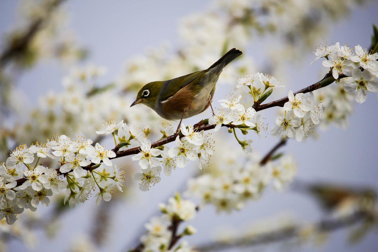 blossom-1324088_1280