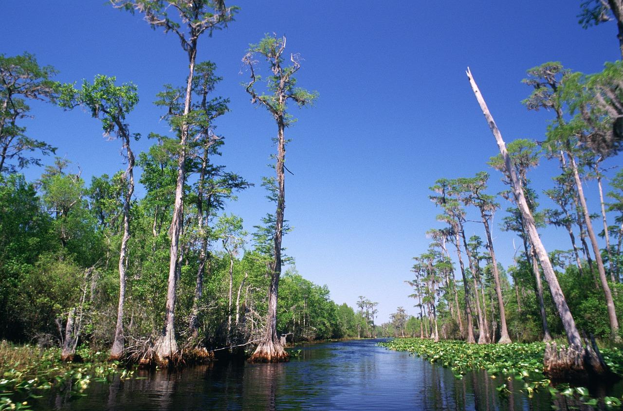 Georgia-Swamp-Okefenokee