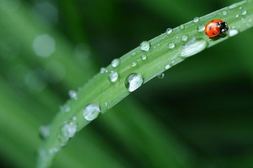 ladybug-574971_1920 (1)