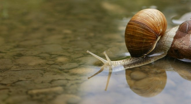 snail-187559_1280