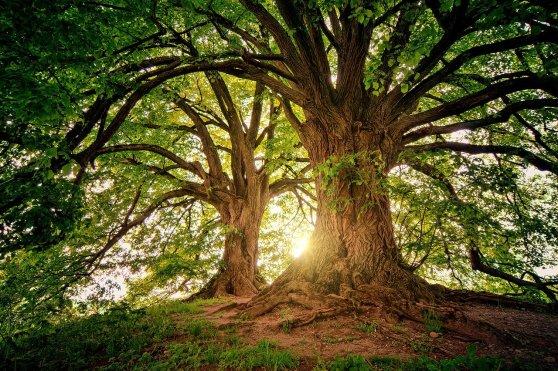 tree-3822149_1280