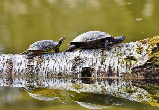 turtles-3289690_1920