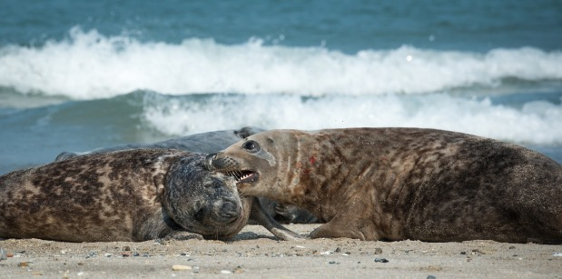 The Moon and Sand… andSeals!