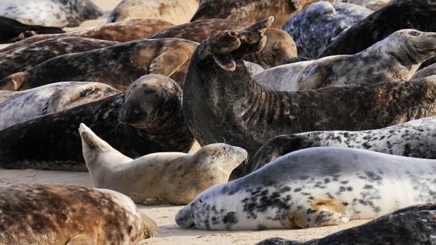 grey-seals-2230999_1280